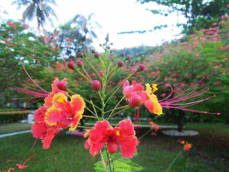 Таиланд, о. Чанг. Экзотические растения