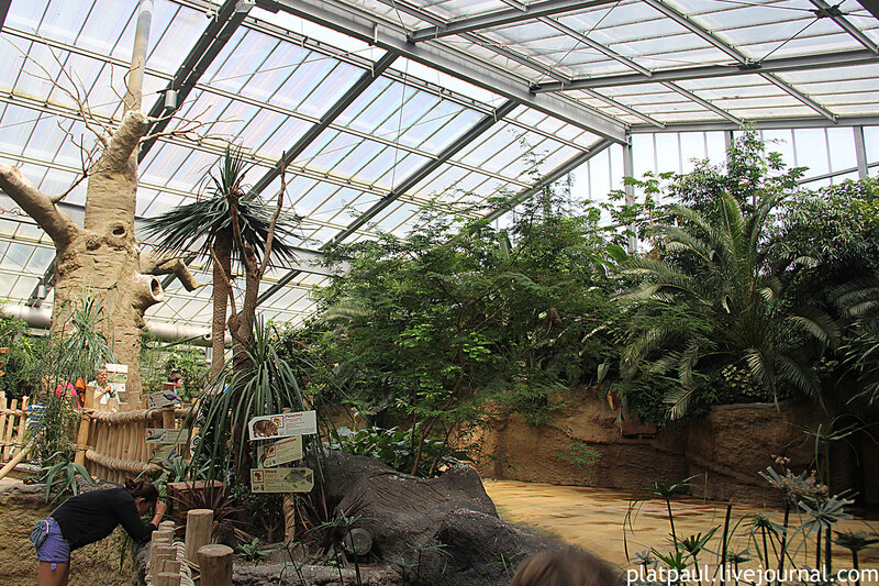 Hippodom в кельнском зоопарке