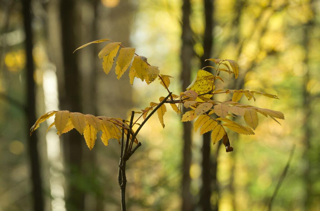 Осеннее настроение. Снято на зеркальный фотоаппарат Nikon D5100 и телеобъектив Nikon 70-300mm f/4.5-5.6. Настройки: выдержка 1/125 секунды, диафрагма, f=8.0, ISO=400, ФР=210 мм.