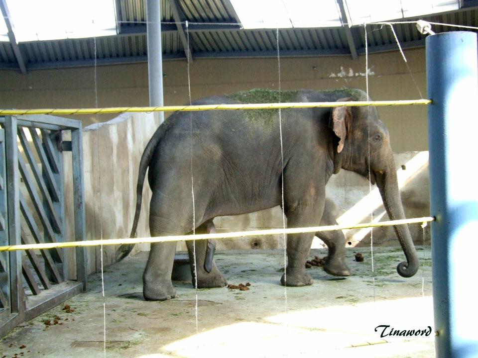 зоопарк-64.jpg