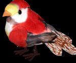 ditab bird1sh.png