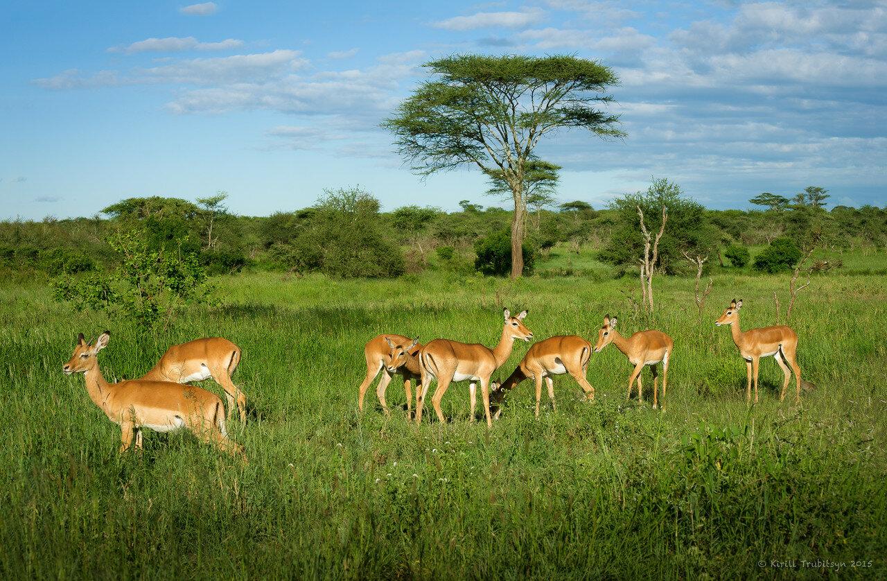 Фотоохота в Танзании 2015