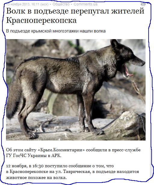 Волк в подъезде перепугал жителей Красноперекопска