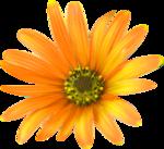 thaliris_flowers_el11.png