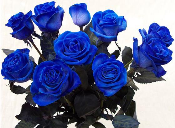 Большой букет синих роз