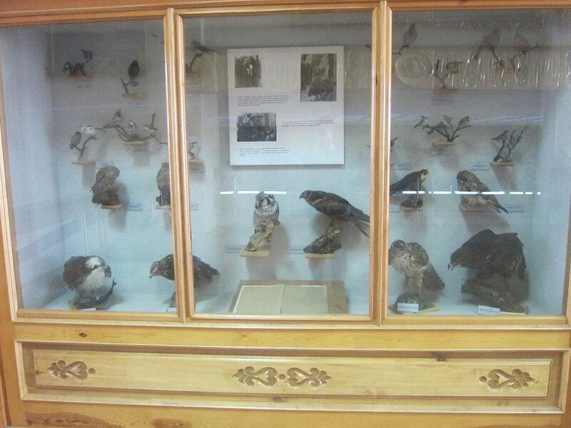 Чучела на втором этаже музея (15.11.2013)