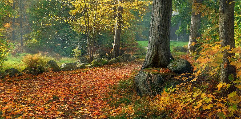 Меня осень на прогулку пригласила