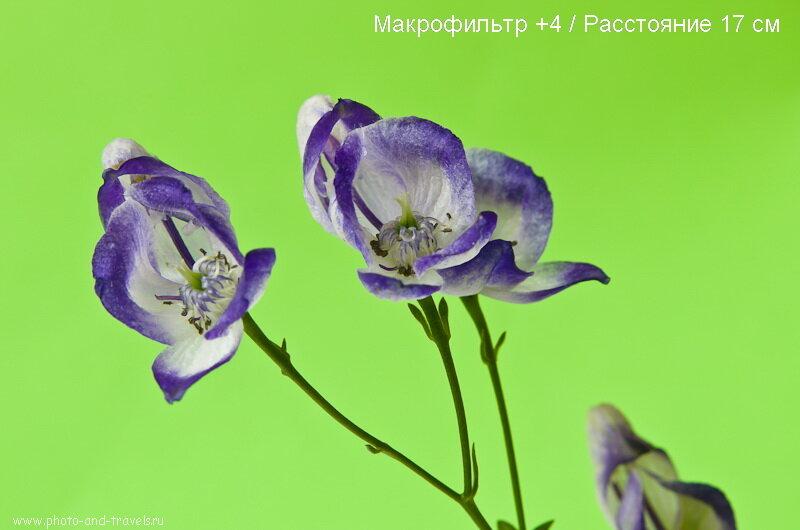 Фото 6. Пример фотографии, снятой на макролинзу +4. Фотоаппарат Nikon D5100 KIT 18-55
