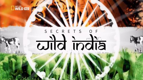 Тайны дикой природы Индии