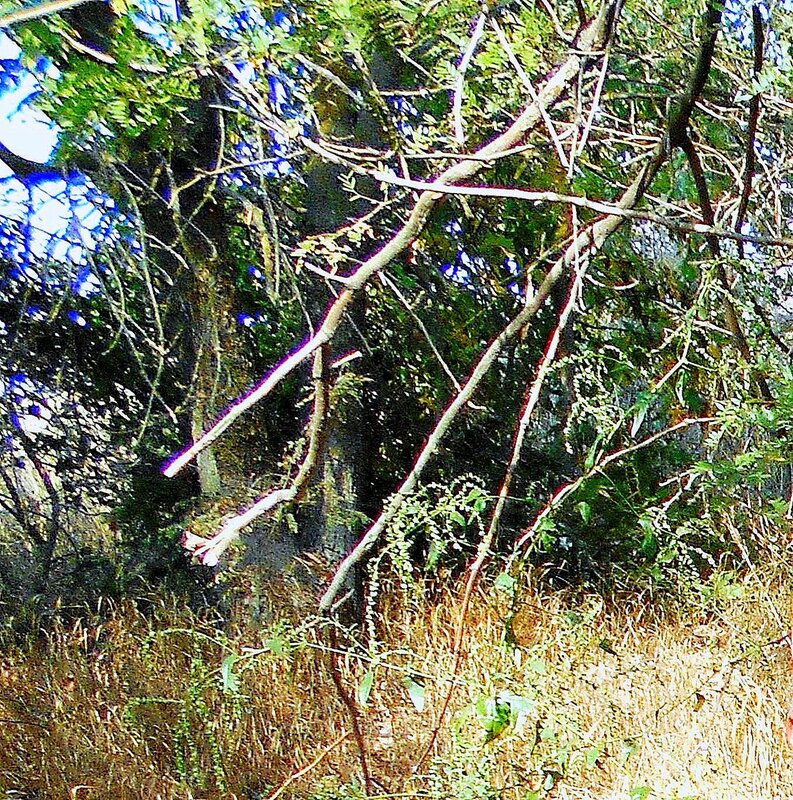 Ветви ... DSCN1414 - 2.JPG