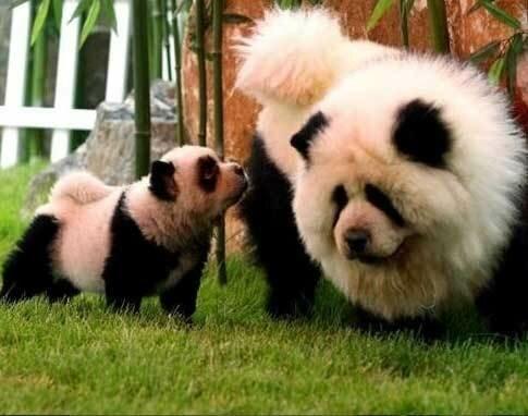 Разнообразные позитивные животные