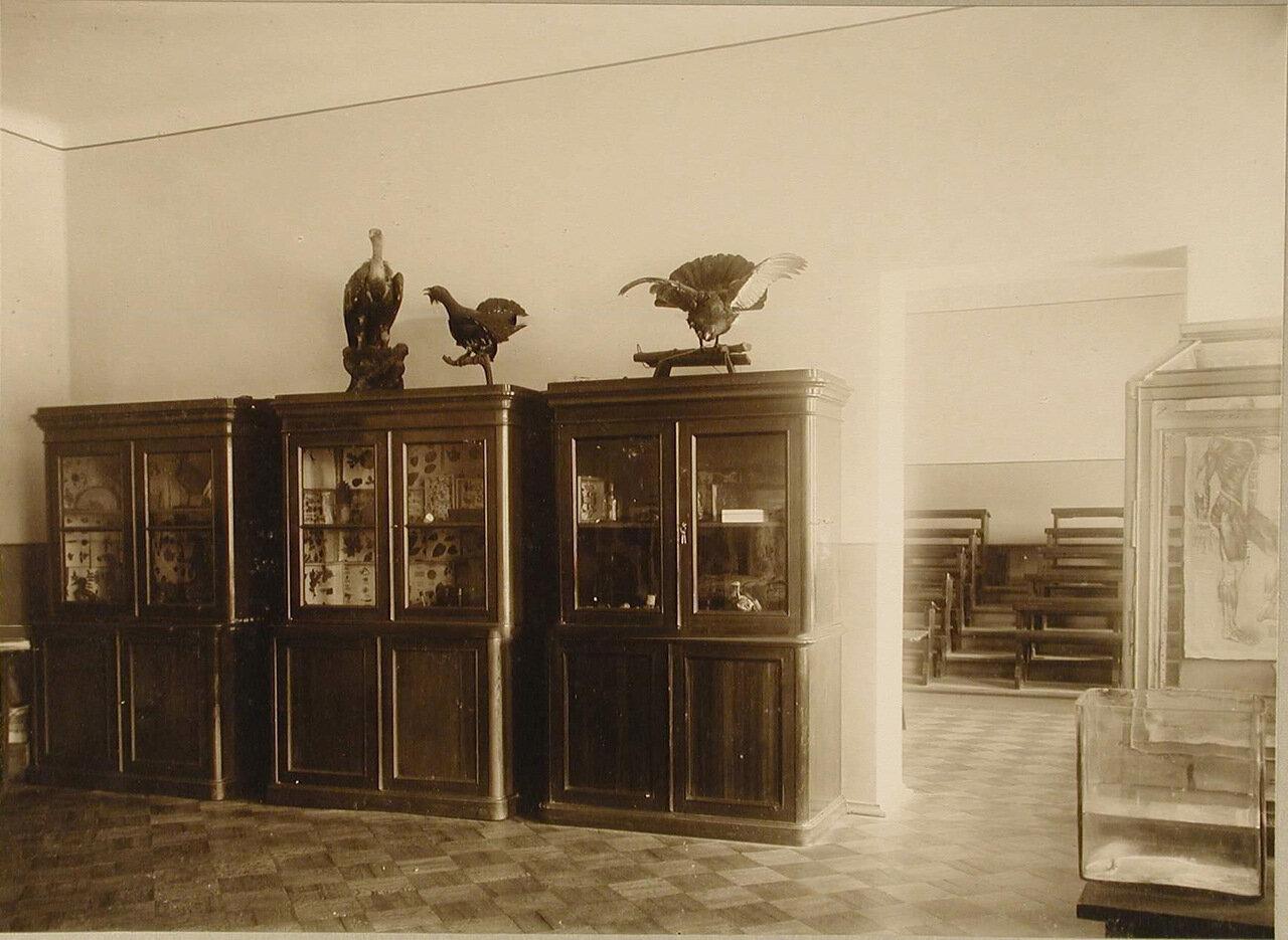 18. Вид части естественно-исторического кабинета училища