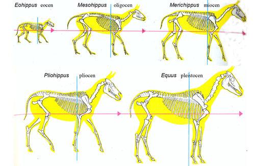 маркеры эволюции.jpg