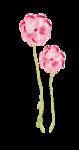 Palvinka_FlowerEssence_flowers4.png