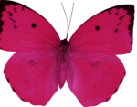 mbennett-youaremyhappy-butterfly.png