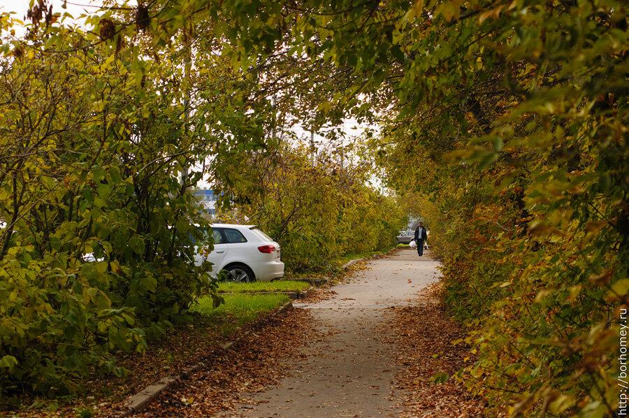 тротуар в листьях