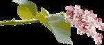 Lilas_La-vie-en-rose_elmt (10-2).png