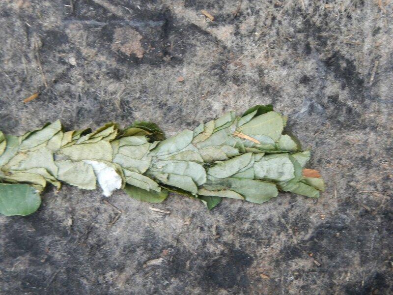 Кладка яиц неизвестного насекомого DSCN4694.JPG