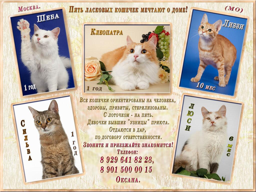 Москва (МО). Пять ласковых кошечек мечтают о доме!