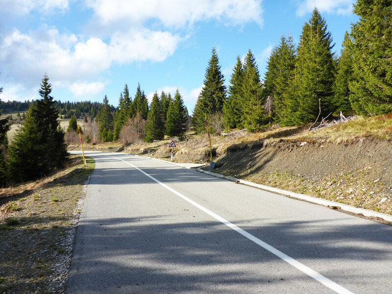 асфальтированная дорога 198 и ели в парке голия (голиjа)