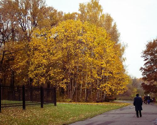 Осень сыплет золотом
