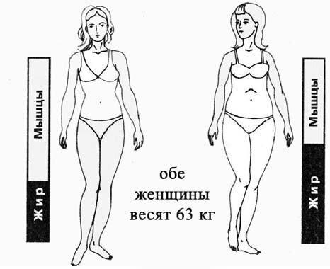 Жир или мышцы?