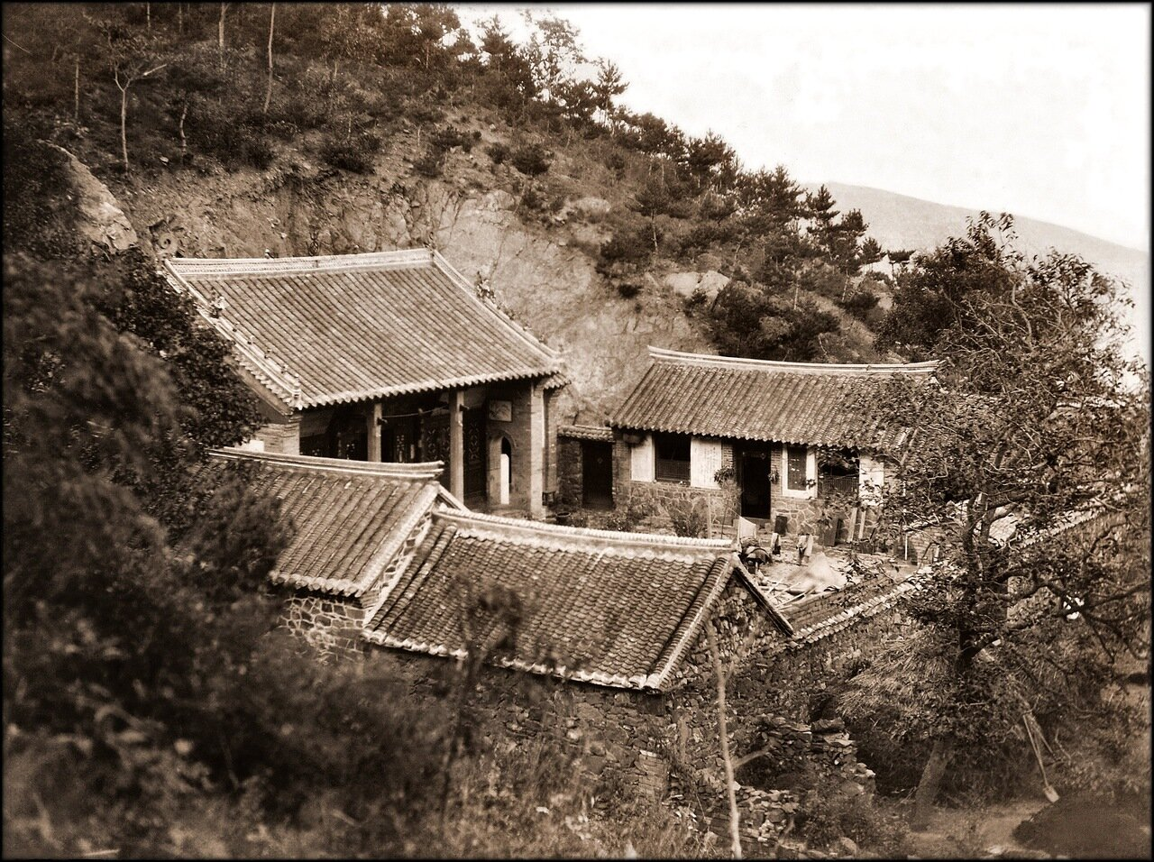 1895. Лес возле храма в Чефу, Шаньдун