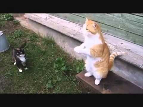 Русские коты (видео)