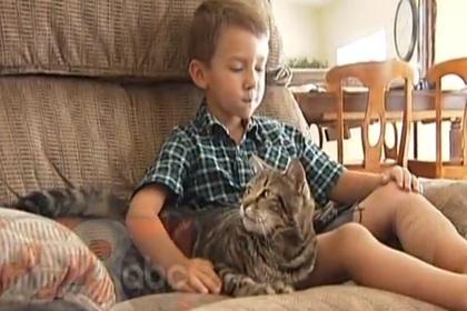 Американская кошка спасла ребенка от собаки