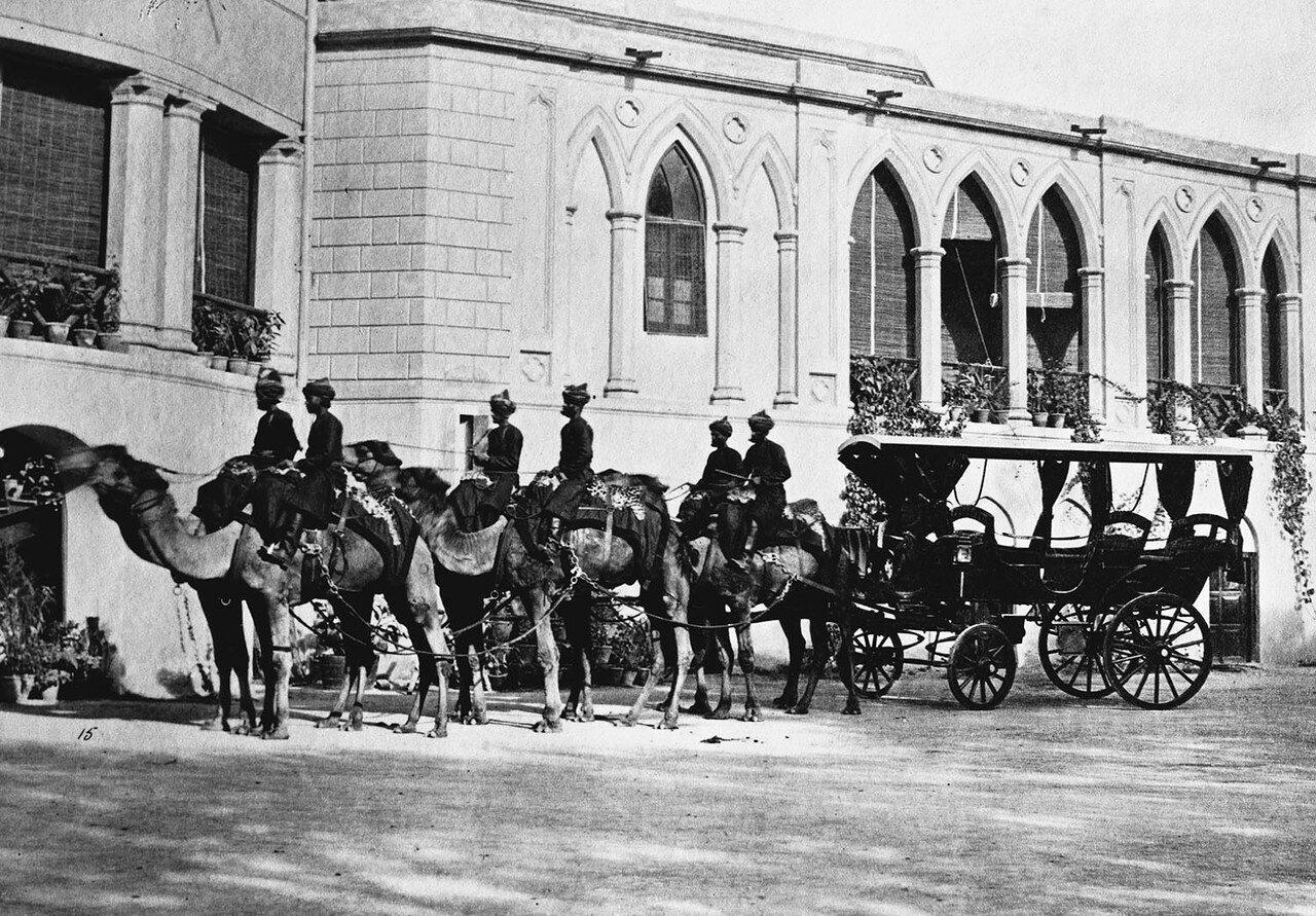 178. Запряженная верблюдами карета вице-губернатора Пенджаба (вариант снимка 40)