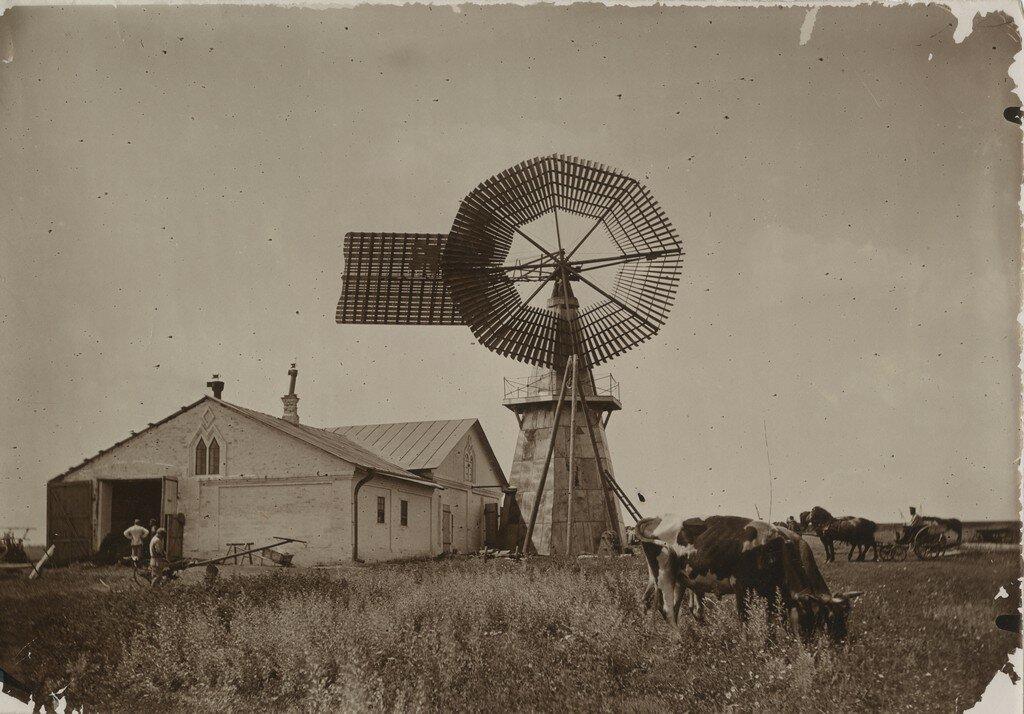 1890 - 1900-е. Ветряки в имении Александровка в Корочском уезде Курской губернии