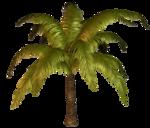 R11 - Palms - 2013 - 012.png