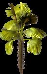 R11 - Palms - 2013 - 3 - 021.png
