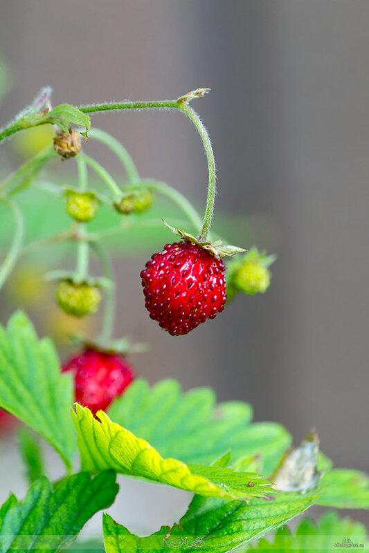 Плодово-овощной коктейль к началу рабочей недели.