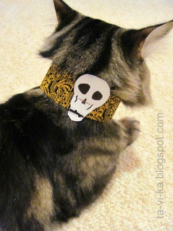 Одежда для кота на Хэллоуин