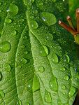 Роса на зелёном листе