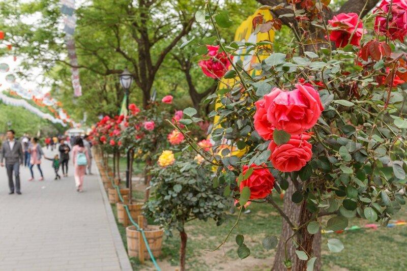 Аллея роз, Парк Таожаньтин, Пекин
