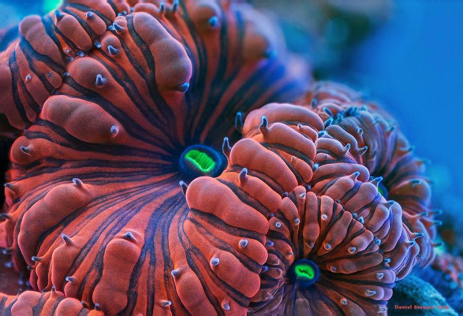 Фантастические макрофотографии кораллов
