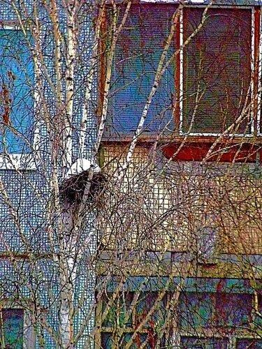 Заснеженное гнездо грача дожидается хозяина