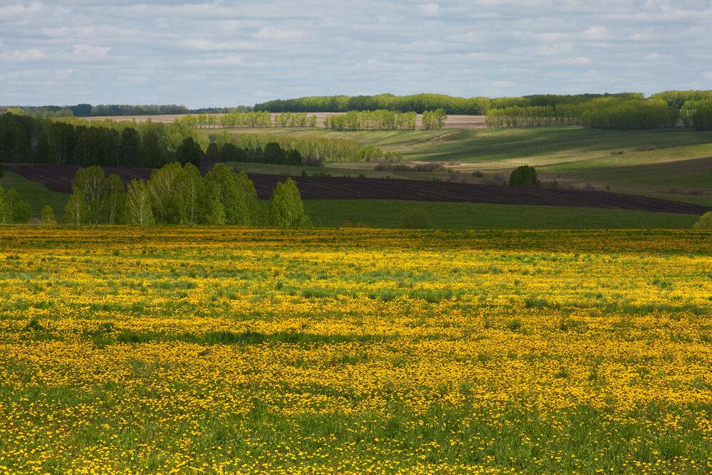 украинская лесостепь картинки хватит как минимум