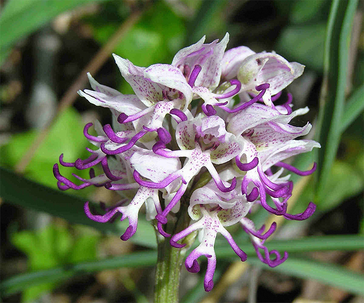 Фото «Удивительные орхидеи!»