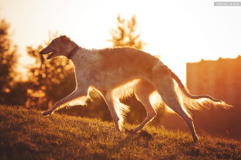 пофотографирую Ваших собак! 0_15f336_9d4f302_orig