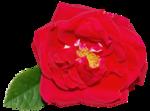 thaliris_flowers_el01.png