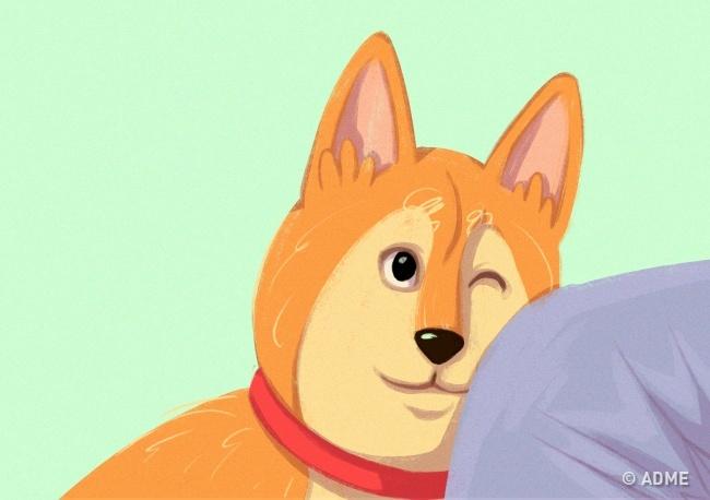 Собака так привлекает внимание ипоказывает, что выейнужны. Также питомец может касаться носом рук