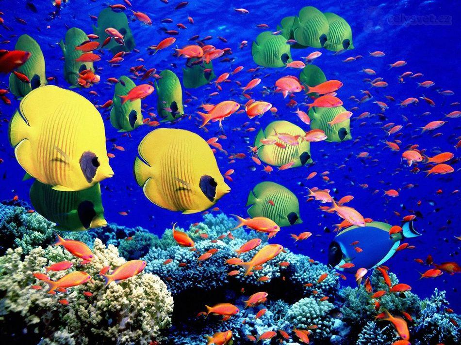 А еще на побережье Красного моря нередкими гостями бывают дельфины, касатки, зеленые черепахи, иглок
