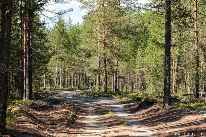 Лесовозная дорога, Карелия