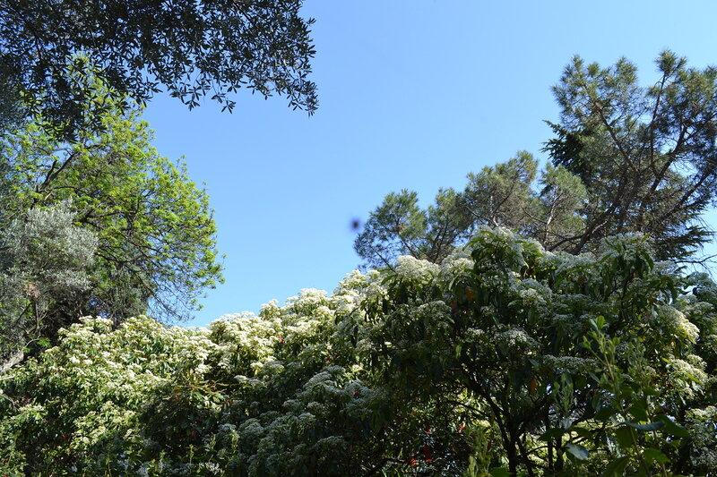 май в Никитском ботаническом