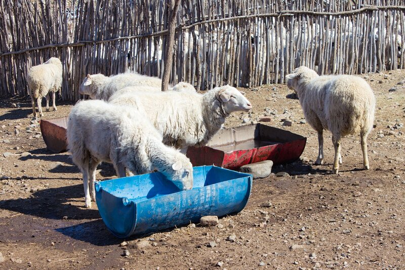 поилки для овец в горах инь шань, внутренняя монголия, китай