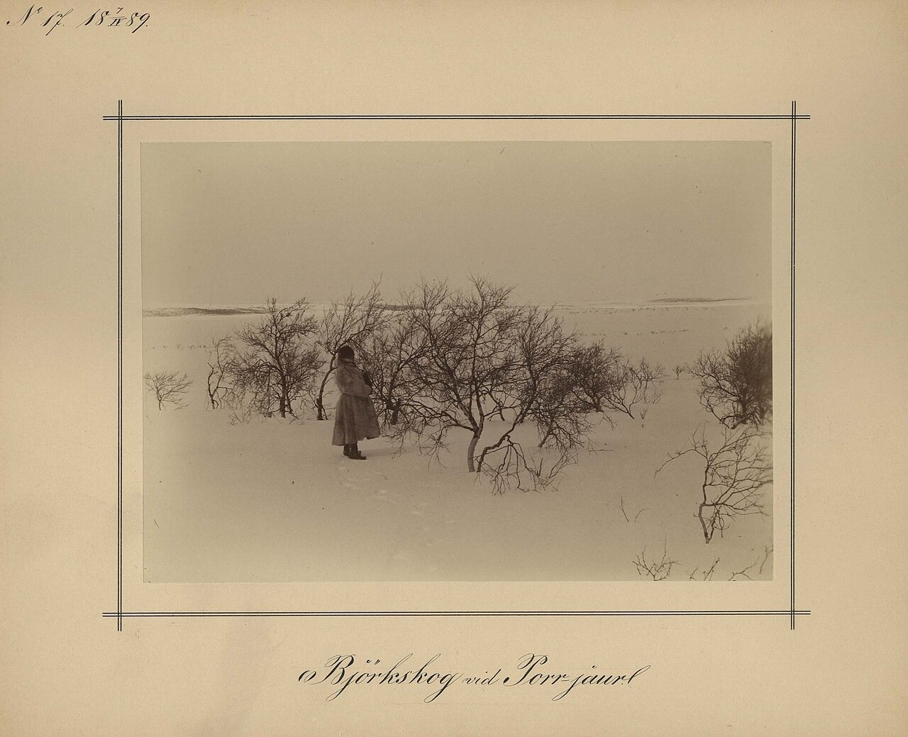 7.4.1889. Березовый лес