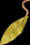 sahlinstudio_sweetstorytelling_leaf.png